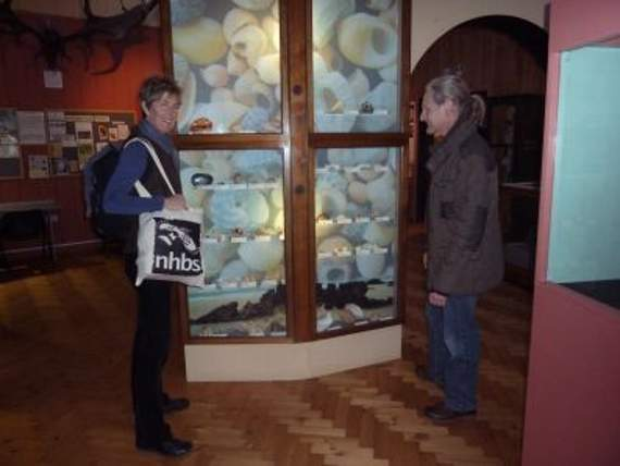 Shells Are Topic At Museum